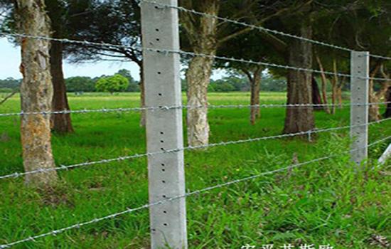 刺鐵絲隔離柵