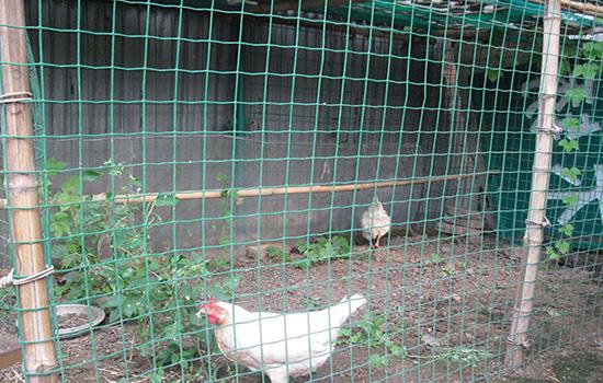 散养土鸡围栏