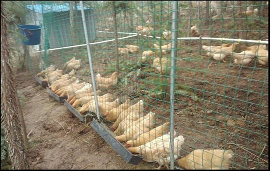 散养鸡网围栏