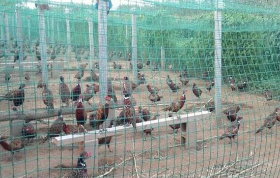养殖铁丝网围栏
