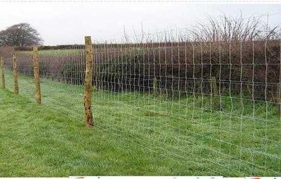 養羊鐵絲網