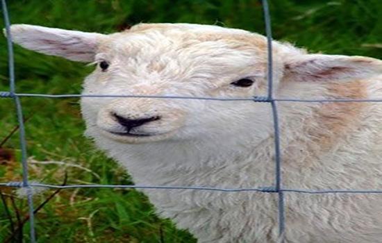 圈羊圍欄網